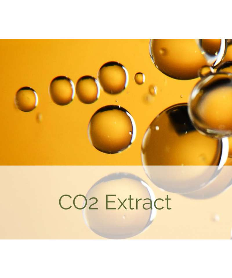 CO2 Extract Photo